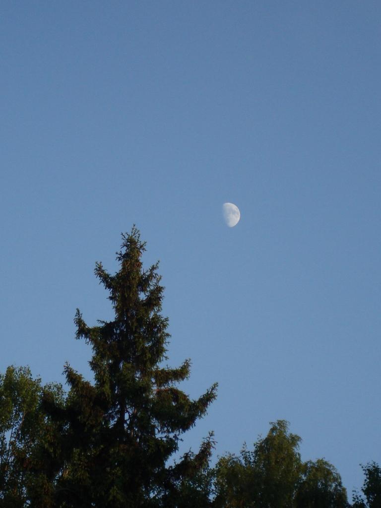 månen (768x1024)